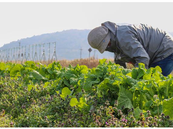 Facebook で各農場の様子、野菜の成長がわかります