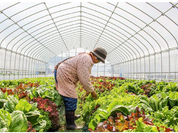 ボックスを農場に取りに行って、農場を見学したり、農家さんと会話することができます